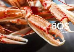 Bos en Lobster Amsterdam West